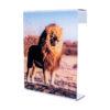 Cuadro de metacrilato león