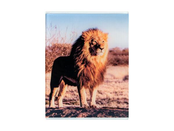 Cuadro metacrilato león