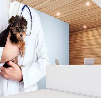 Decoración para clínicas veterinarias