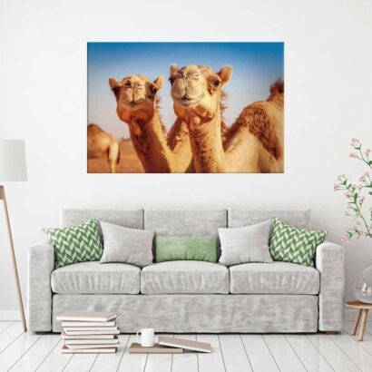 Cuadro Camellos Desierto