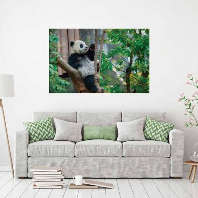 Fotocuadro Animales Oso Panda