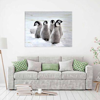 Fotocuadro Animales Pingüinos Polares