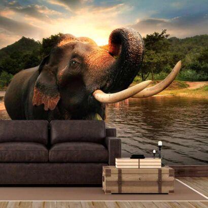 Fotomural Elefante Atardecer