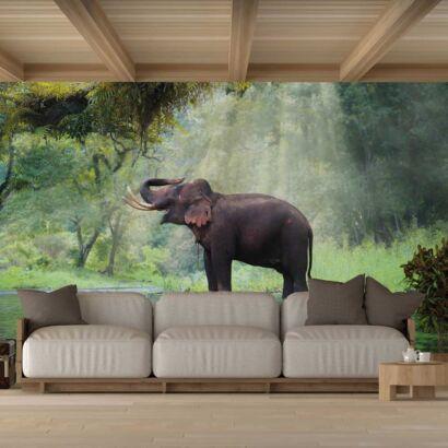 Fotomural Vinilo Elefante Bosque Tailandia