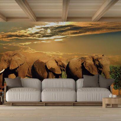 Fotomural Vinilo Parque Addo Sudáfrica
