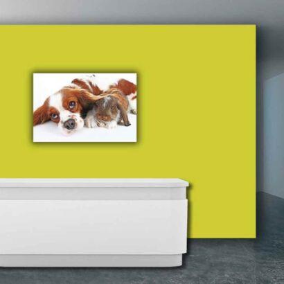 Papel Pintado Perro y Conejo