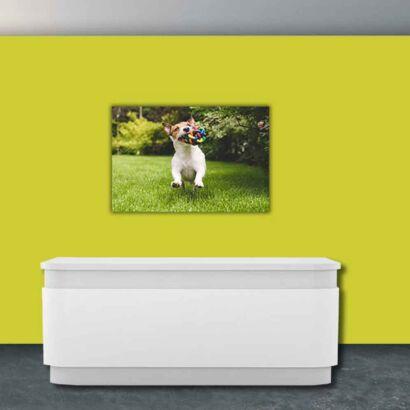 Papel Pintado Perro y Juguete