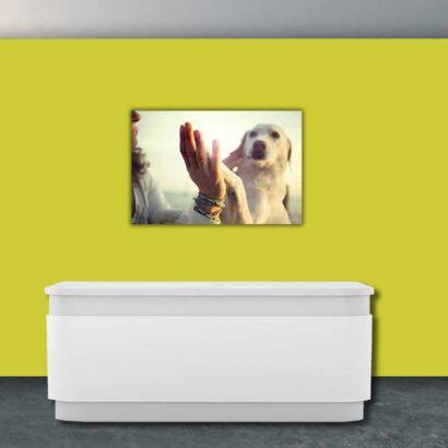 Papel Pintado Perro Saludo