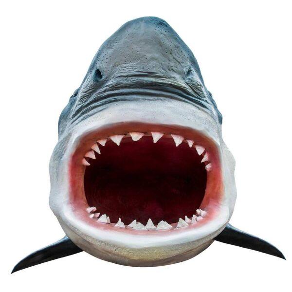 Vinilo Decorativo Tiburón Diseño